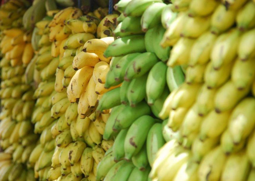 Es ist egal, ob Du die Bio-Banane isst