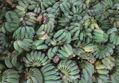 Ist es wirklich egal, ob Du die Bio-Banane isst?
