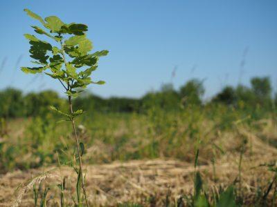 Wie der Wald das Klima richtig schützt
