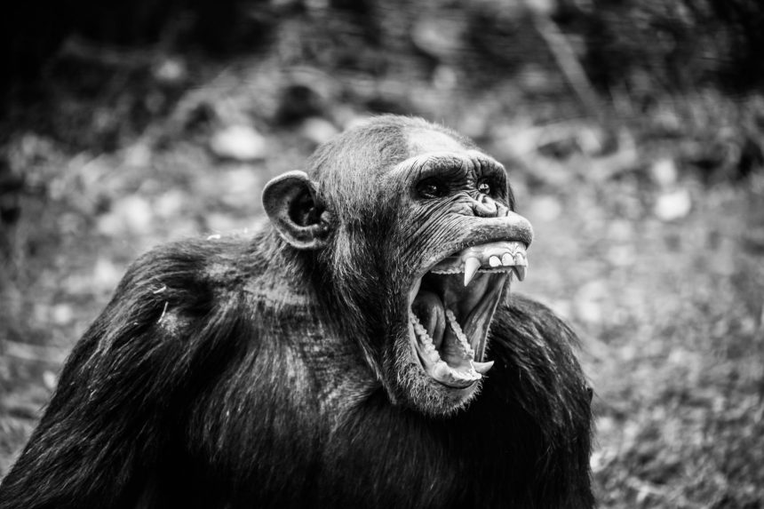 """""""Nachhaltigkeit"""" die Zähne zurück geben"""